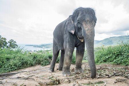 Beautiful elephant on the hill in Phuket, Thailand