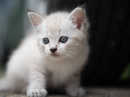Small adorable kitten with blue eyes outdoor Stock Photo