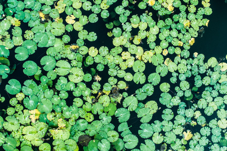 Aerial drone top view of duckweed covering the surface of a pond Zdjęcie Seryjne