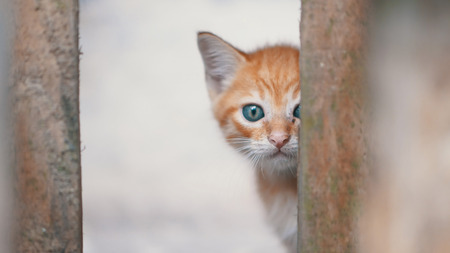 Small adorable kitten with blue eyes looking behind the bars