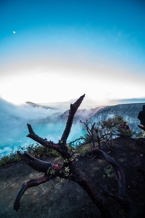 Dead trees in Ijen volcano with acid lake, Java, Indonesia Фото со стока