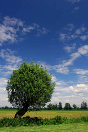 acre: Single tree on reaped acre