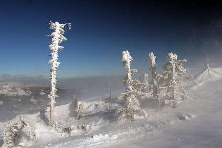 pin�culo: Pin�culo de la monta�a y los �rboles en la nieve Foto de archivo