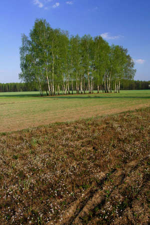 acre: Fertilizer on the acre in the spring day