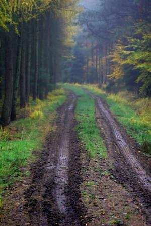 slushy: Slushy road between trees in a rainy day Stock Photo