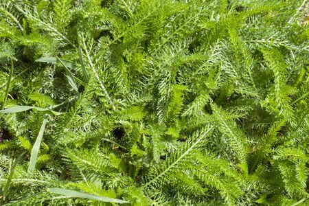 Groene grassen