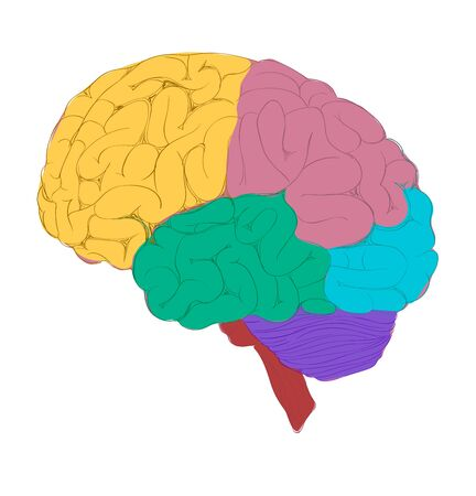 Human brain with colorful diagram of different activity zone.