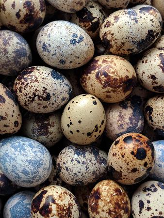 Quail eggs image Stock Photo