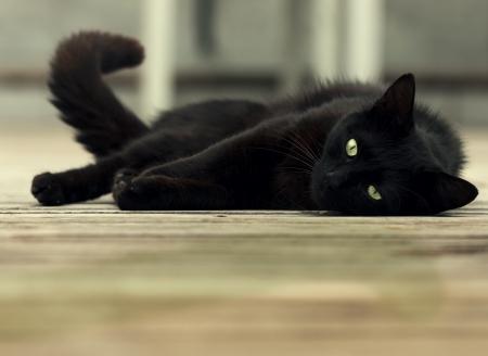 mooie zwarte kat met groene ogen liggen op houten vloer
