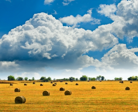 Summer landscape with bales against blue sky Stock fotó