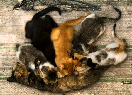 alley cat nursing their young kittens lying on an old rug Stock fotó