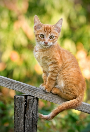 little ginger kitten sitting on a wooden slat