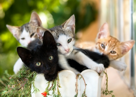 family of kittens in a pot