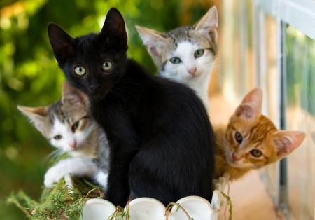 gato negro: familia de gatitos en una olla Foto de archivo