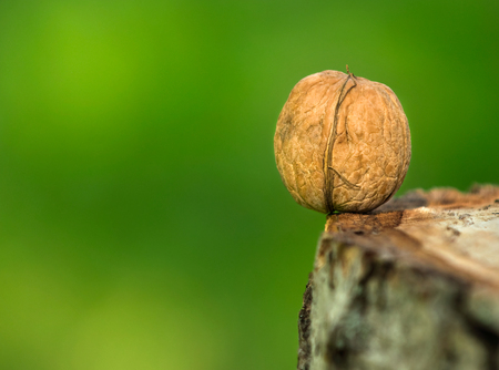 walnut on the edge of log close up