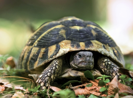 forest turtle in its natural environment close up Standard-Bild