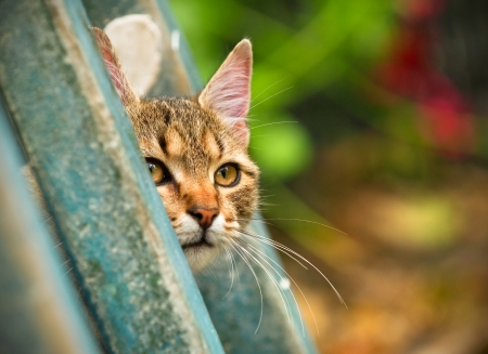 cat peeking behind a wooden fence, close-up