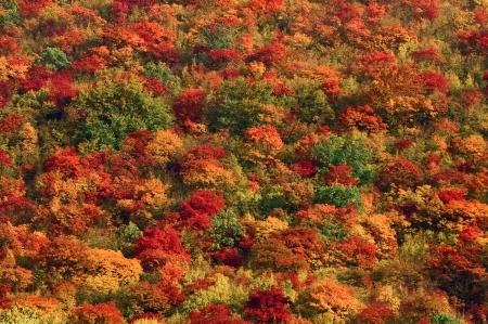 colorful autumn mountain landscape, the colors of autumn Standard-Bild