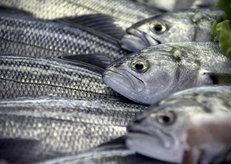 ordered fresh fish in showcase