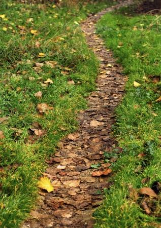 green meadow in the woods with a path covered with dry leaves Standard-Bild