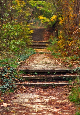 old stairs covered with dry leaves in a forest in autumn Standard-Bild