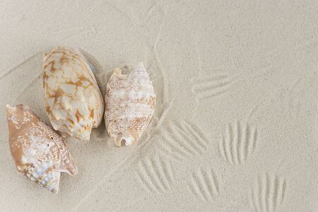Seashells on the white sand Banque d'images