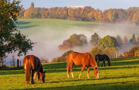 Horses grazing on pasture at sundown in orange sunny beams. Stockfoto