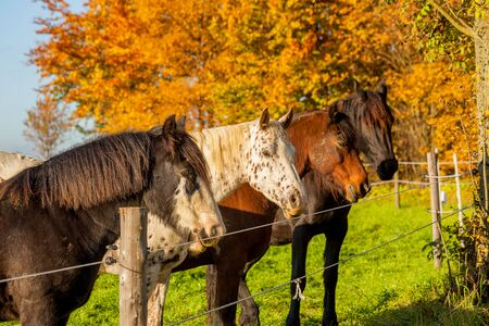 Horses in a pasture behind a fence