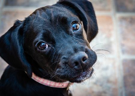 Luna the Puppy