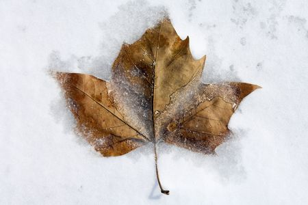 Whole brown leaf frozen into snow and ice Stock Photo - 1209446
