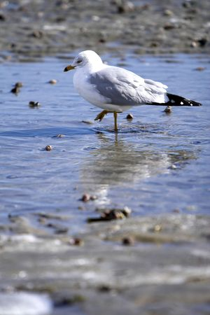 Seagull on a frozen beach in winter Stock Photo - 1209447