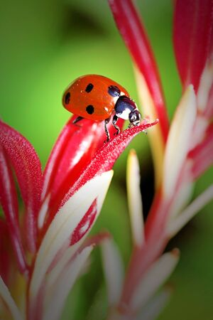 Ladybird bug on the end of a flower Stock Photo - 1209476