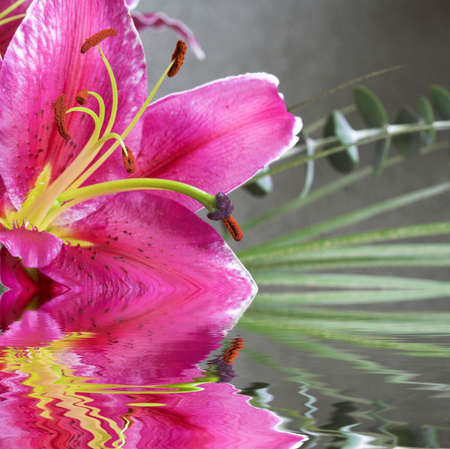 hayfever: Beautiful tiger lilly macro with green leaf background
