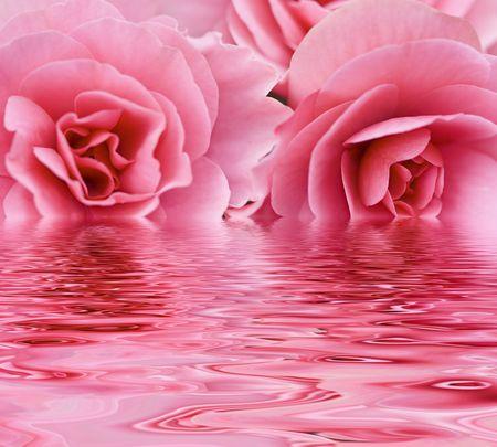Zwei rosa Rosen reflektiert über Wasser