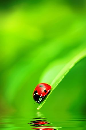 Ladybug on the end of a green leaf Stock Photo - 3145434