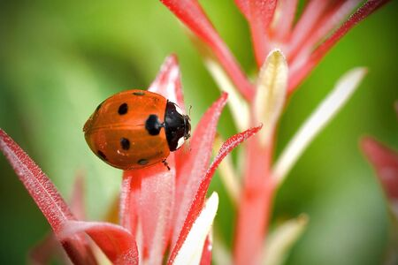 Ladybug climbing on flowers Stock Photo - 3145451