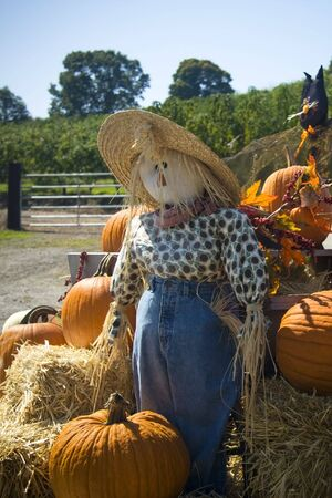 Halloween thanksgiving scarecrow sitting on a hay bail with pumpkins in farm photo