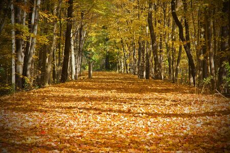 Beautiful autumn trail with bright orange leaves and trees photo