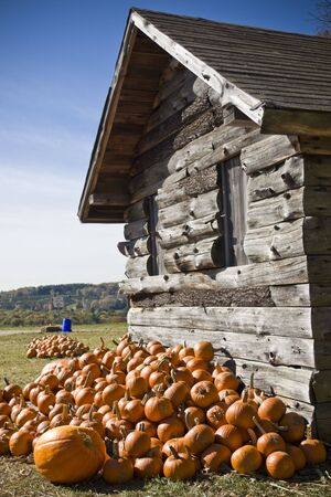 A pile of pumpkins next to an old wooden shed Stock Photo - 3760137