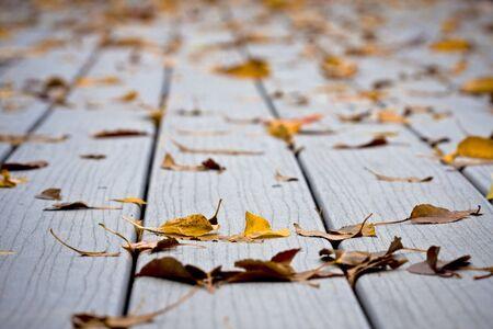decking: Fallen autumn leaves after a light fall shower on decking Stock Photo