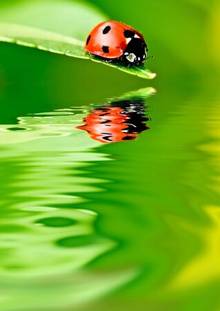 mirror on the water: Ladybug on a leaf reflected on water