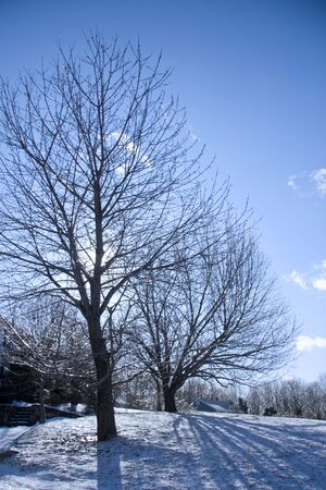 Frozen trees on a cold winter landscape Stock Photo - 4149146