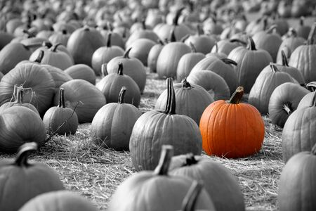 Large pumpkins sitting in field photo