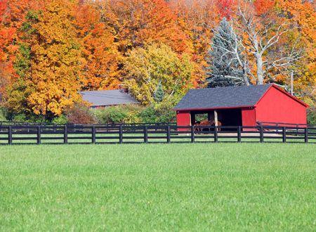 Mooie herfst achtergrond van paarden in een stabiele Stockfoto