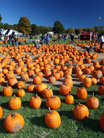Traditional American pumpkin patch farm in the fall Stock Photo - 8201521