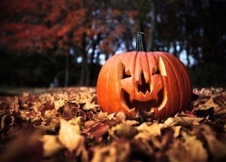 citrouille halloween: Halloween Citrouille sur feuilles de bois en couleur de contraste �lev�