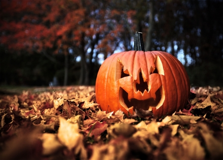 Halloween pumpkin on leaves in woods in high contrast color Stock Photo - 8201507