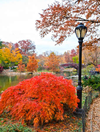 lamp post: Central park in New York city during the fall