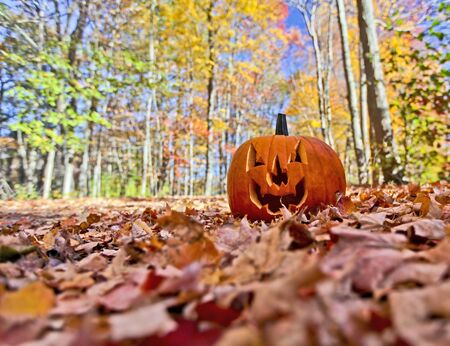 Halloween pumpkin on leaves in woods in high contrast color photo