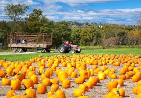 Pumpkin patch field on a farm in the fall with hayride photo